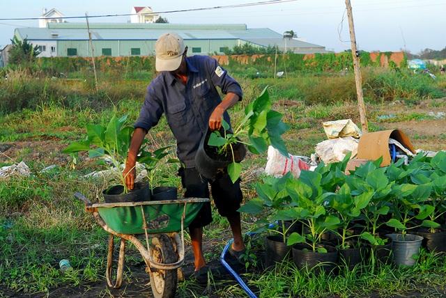 Hoa tết không kết nụ, nông dân xót xa vứt bỏ hàng nghìn chậu - 6