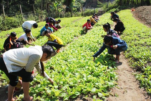Học sinh Trường PT DTBT THCS Nậm Típ chăm sóc vườn rau sau giờ học.