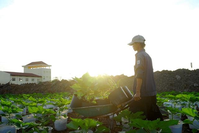 Người dân trồng hoa tết đang đối mặt với một vụ mùa thất thu.
