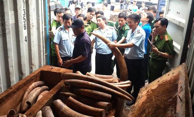 Một số lượng lớn ngà voi bị bắt giữ trong vụ việc.