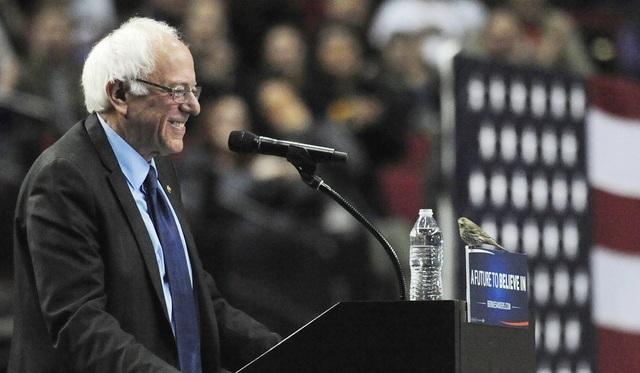 Cựu ứng viên tổng thống đảng Dân chủ Bernie Sanders mỉm cười khi một con chim đậu trên bục trong khi ông đang phát biểu tại Trung tâm Moda ở thành phố Portland, bang Oregon. (Ảnh: AP)