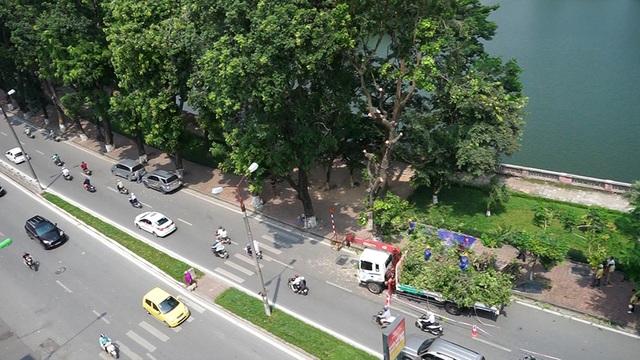 Sáng 16/9, Sở Xây dựng phối hợp với Ban quản lý đường sắt đô thị Hà Nội bắt đầu di dời cây xanh nằm trong hành lang dự án đường sắt đô thị trên cao Nhổn - Ga Hà Nội.