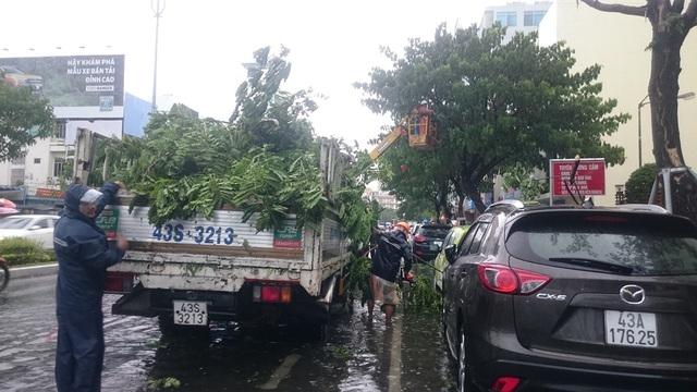 Công ty cây xanh cắt tỉa cây phòng chống bão