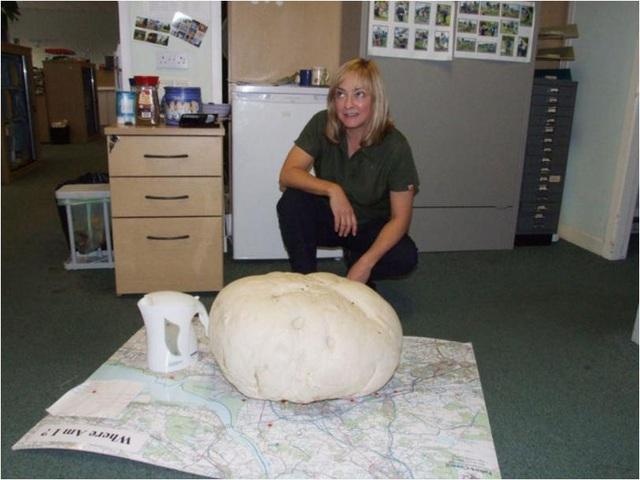 Nấm khổng lồ nặng 10kg - 1