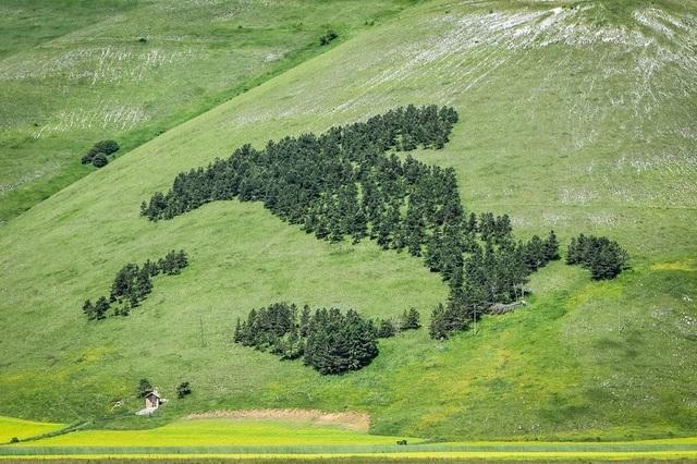 Những đài tưởng niệm có hình dáng rừng cây độc đáo trên thế giới - 1