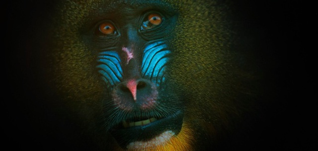 """""""Truy tìm"""" con vật đa sắc màu nhất thế giới - 1"""
