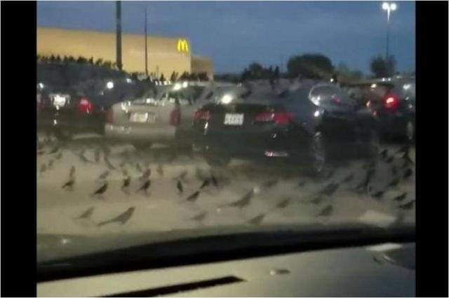 Sáo đen phủ kín bãi đỗ xe của siêu thị Walmart. Ảnh cắt từ clip: Tami Denny/Facebook