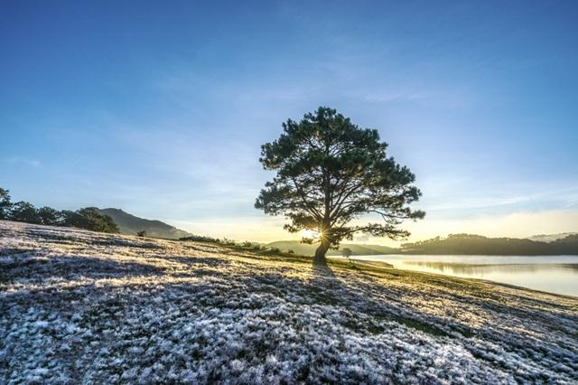 Đến Đà Lạt khám phá đồi cỏ Tuyết tuyệt đẹp - 1
