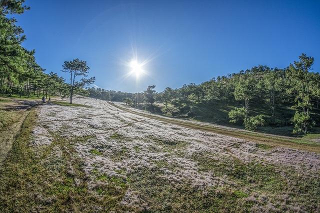 Đến Đà Lạt khám phá đồi cỏ Tuyết tuyệt đẹp - 10