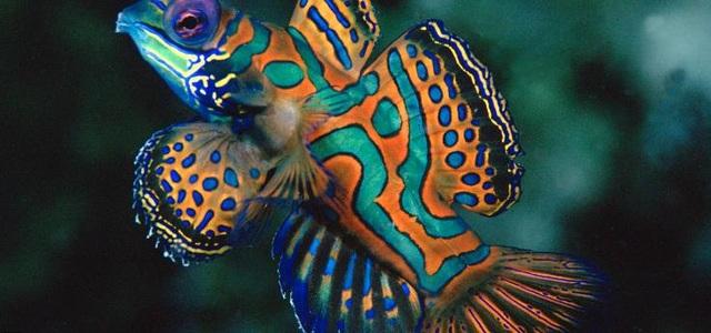 """""""Truy tìm"""" con vật đa sắc màu nhất thế giới - 12"""