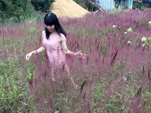 Màu hồng của đồi cỏ xóa tan cái lạnh lẽo của những ngày đầu đông.