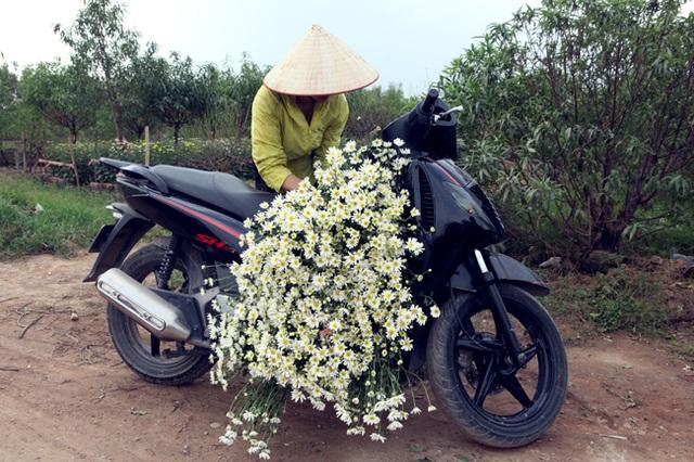 Nhiều gia đình đổi đời nhờ trồng loài hoa này