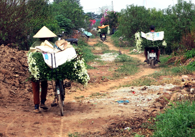 Hoa cắt từ vườn được bó gọn gàng, theo chân những chiếc xe đạp tràn về phố.