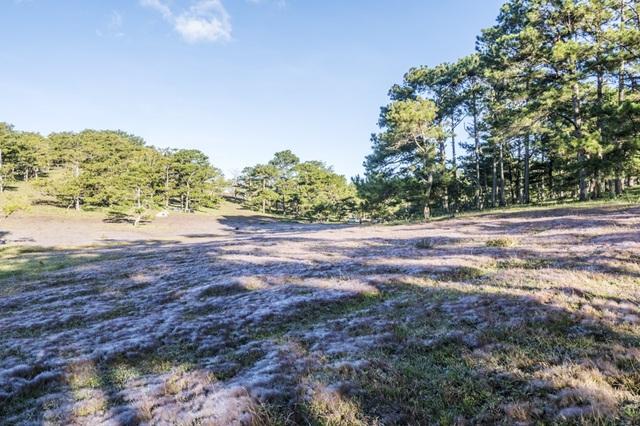 Đến Đà Lạt khám phá đồi cỏ Tuyết tuyệt đẹp - 13