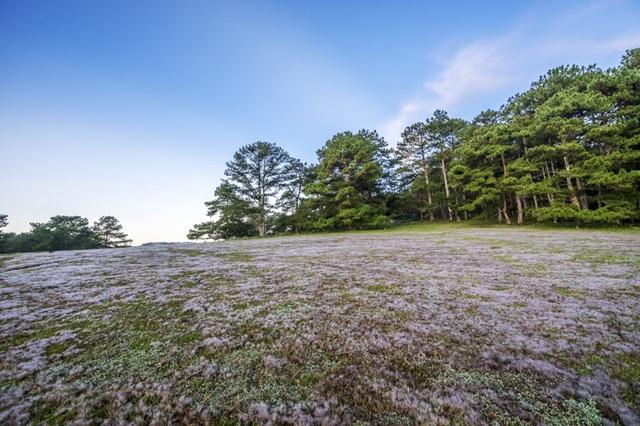 Đến Đà Lạt khám phá đồi cỏ Tuyết tuyệt đẹp - 14