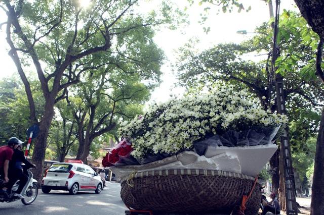 Loài hoa nhỏ bé, trắng muốt này lại có nét mộc mạc, tinh khôi, quyến rũ rất riêng của mùa đông Hà Nội