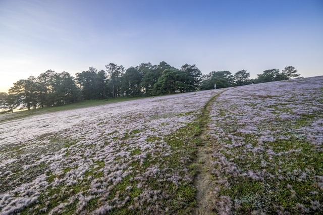 Đến Đà Lạt khám phá đồi cỏ Tuyết tuyệt đẹp - 15