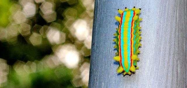 """""""Truy tìm"""" con vật đa sắc màu nhất thế giới - 17"""