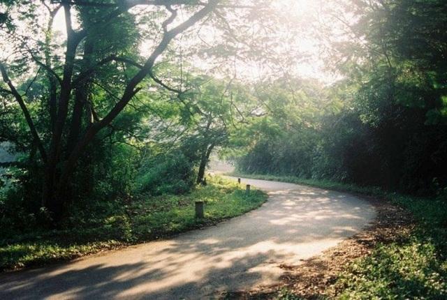 Con đường trải đầy nắng vàng ở Ba Vì.