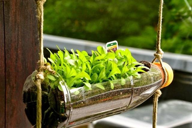 Chỉ cần dùng dao, kéo khoét một lỗ, cho đất đã bổ sung chất dinh dưỡng vào rồi bỏ hạt giống, tưới nước hàng ngày.