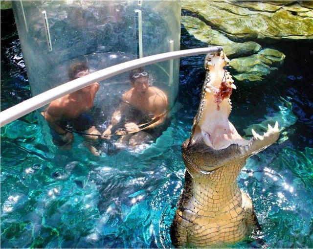 """Lồng kính trong suốt cho phép du khách """"đối mặt"""" với cá sấu - 2"""