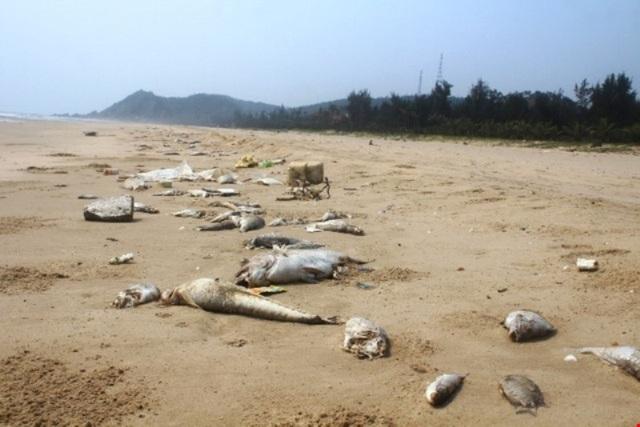 Formosa xả thải gây ra thảm họa ô nhiễm môi trường biển