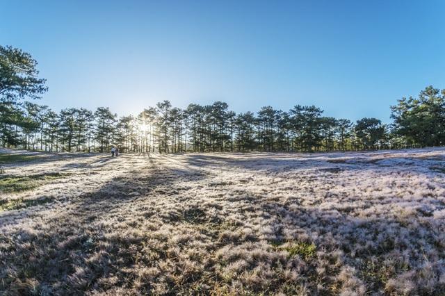 Đến Đà Lạt khám phá đồi cỏ Tuyết tuyệt đẹp - 2