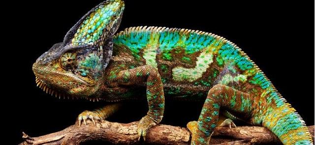 """""""Truy tìm"""" con vật đa sắc màu nhất thế giới - 3"""