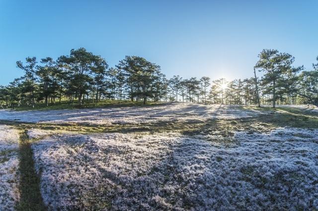 Đến Đà Lạt khám phá đồi cỏ Tuyết tuyệt đẹp - 3