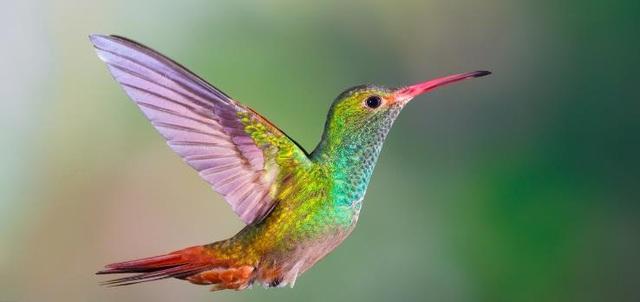 """""""Truy tìm"""" con vật đa sắc màu nhất thế giới - 4"""