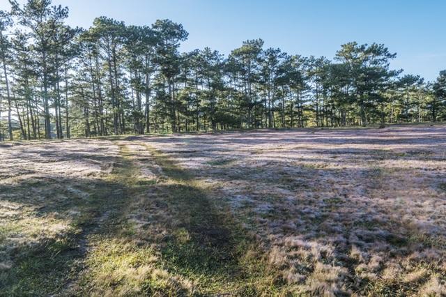 Đến Đà Lạt khám phá đồi cỏ Tuyết tuyệt đẹp - 4