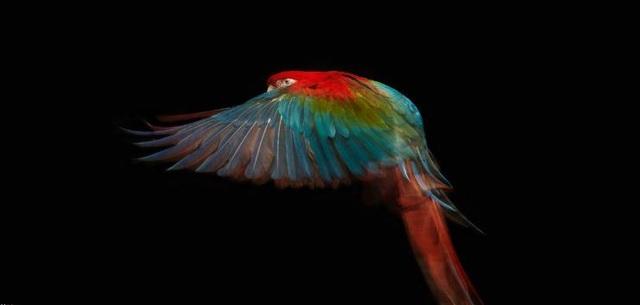 """""""Truy tìm"""" con vật đa sắc màu nhất thế giới - 5"""