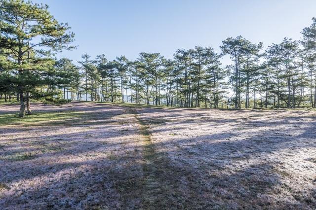 Đến Đà Lạt khám phá đồi cỏ Tuyết tuyệt đẹp - 5