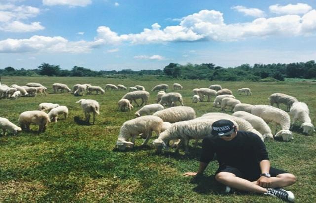 4 cánh đồng chăn cừu đẹp đến mê hồn ở Việt Nam - 6