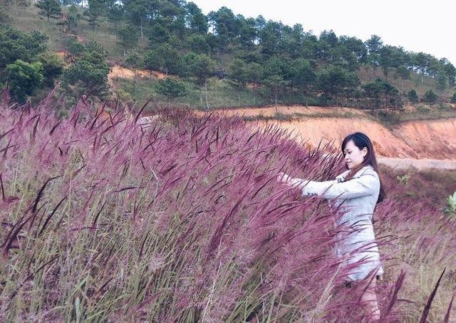 Đồi cỏ hồng tại Đà Lạt đẹp rực hút hồn du khách.