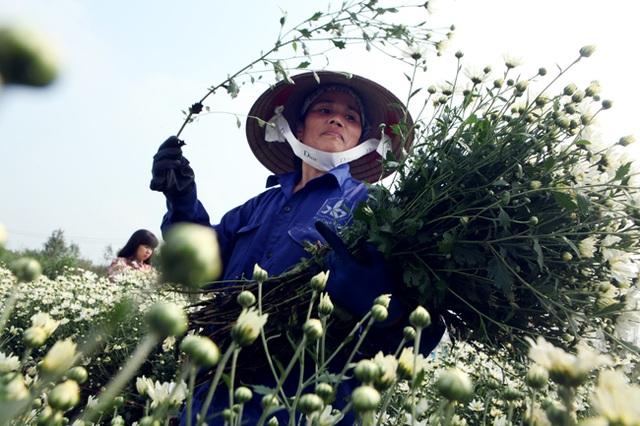 Ngoài việc bán hoa, vài năm gần đây người dân có thêm thu nhập nhờ dịch vụ chụp ảnh trong vườn nở rộ. Mỗi nhà vườn thu trung bình 20.000 đồng một người cho một lần vào chụp ảnh.