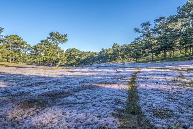 Đến Đà Lạt khám phá đồi cỏ Tuyết tuyệt đẹp - 6