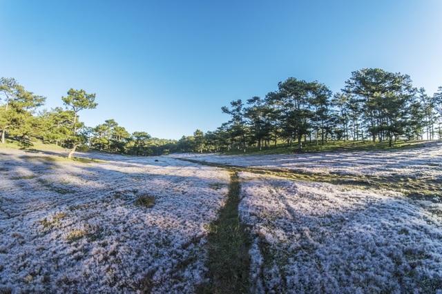Đến Đà Lạt khám phá đồi cỏ Tuyết tuyệt đẹp - 7