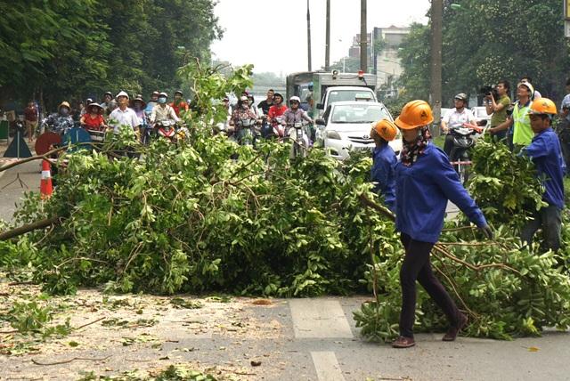 Người điều khiển phương tiện giao thông đứng chờ, công nhân cắt tỉa một cây xà cừ trên đường Kim Mã