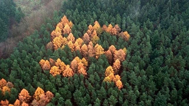 Những đài tưởng niệm có hình dáng rừng cây độc đáo trên thế giới - 8