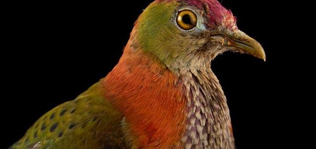 """""""Truy tìm"""" con vật đa sắc màu nhất thế giới - 8"""