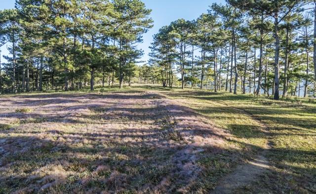 Đến Đà Lạt khám phá đồi cỏ Tuyết tuyệt đẹp - 8