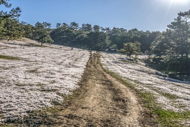 Đến Đà Lạt khám phá đồi cỏ Tuyết tuyệt đẹp - 9