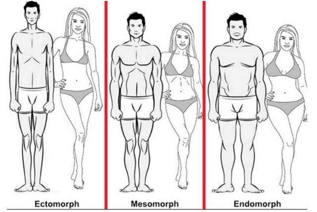 Các kiểu cơ thể