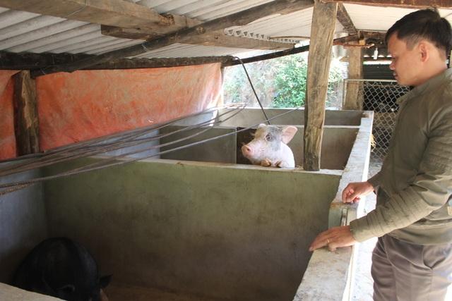 Chuồng lợn 15-20 con là nguồn bổ sung thức ăn cho học sinh vùng biên.
