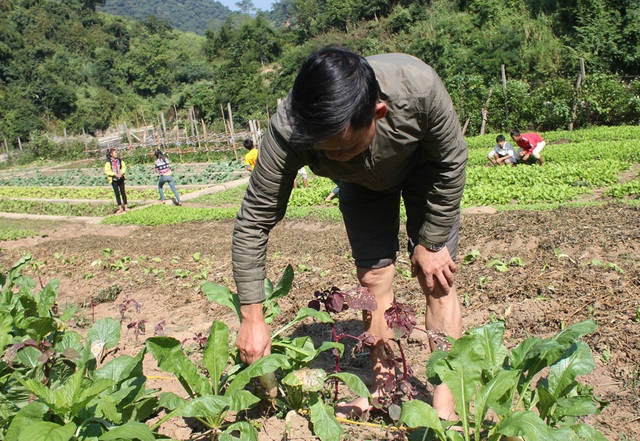 Vườn rau với nhiều loại rau khác nhau, đủ cung cấp cho bếp ăn bán trú phục vụ 251 học sinh.