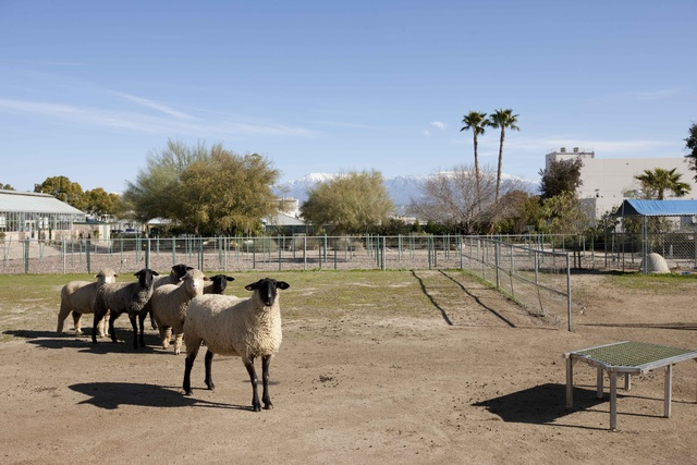 Cận cảnh nông trại thực phẩm hữu cơ lớn nhất nước Mỹ - 3