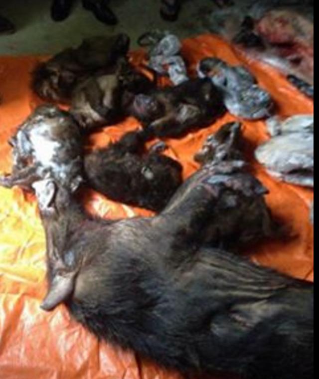 Các cá thể động vật hoang dã đã chết được cất giấu tại nhà ông Quân