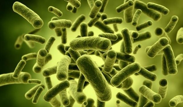 Cơ thể chúng ta chứa khoảng 100 ngàn tỷ vi khuẩn, cả tốt lẫn xấu