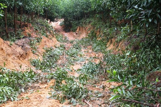 Đường mở lên các khu rừng lầy lội khi có mưa
